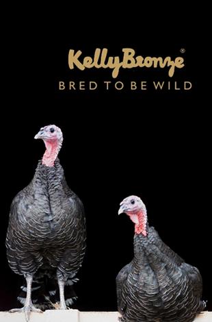 Kalkoendij rollade KellyBronze